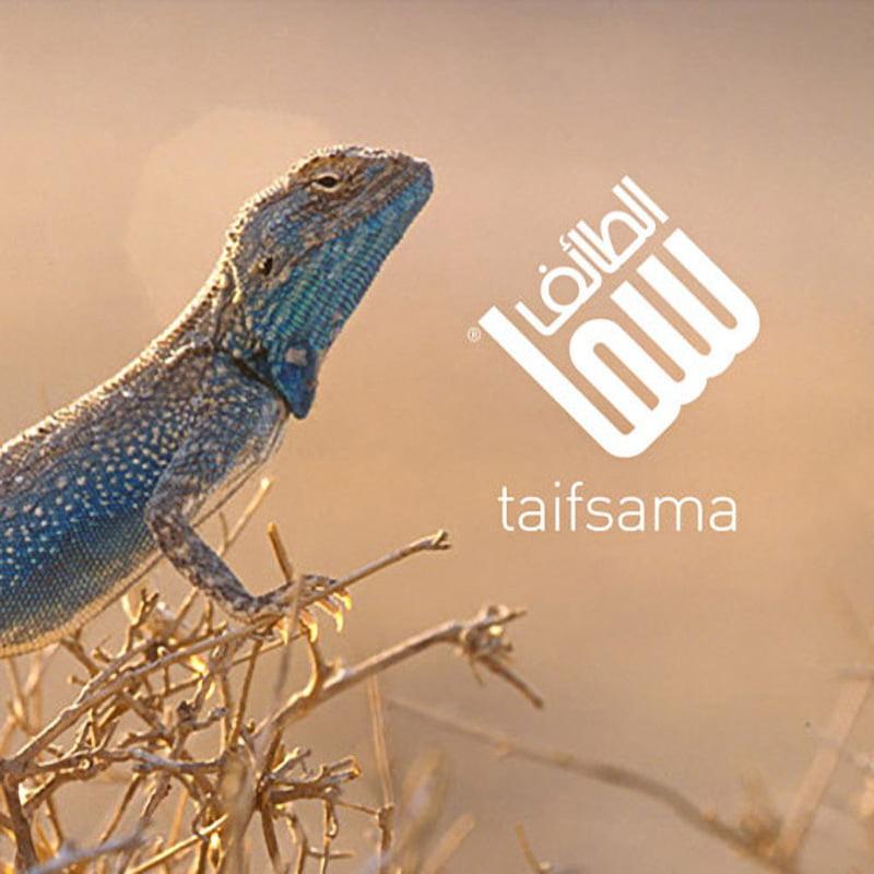 TAIFSAMA